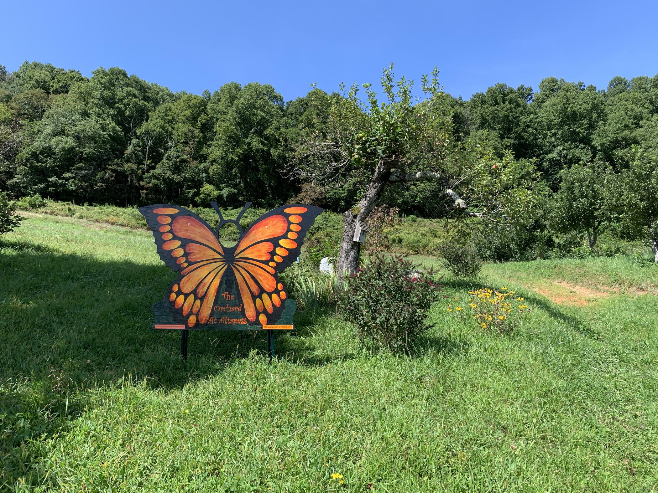 Butterfly2100x1575