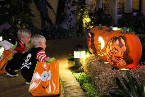 Trick Or Treat Expedition